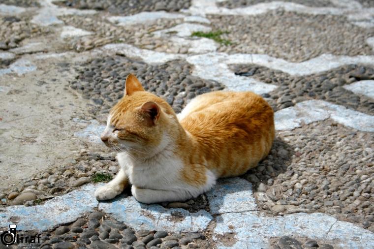 gatochefchaouen