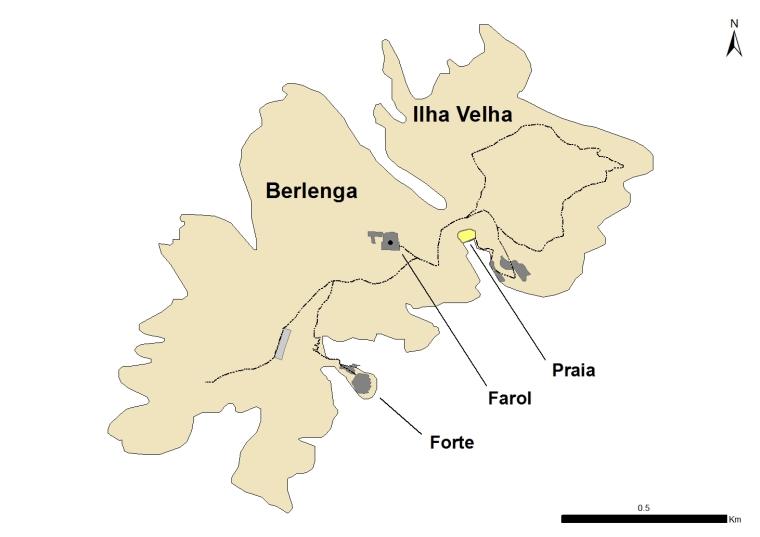 berlenga-1
